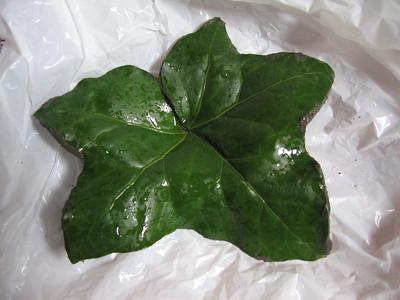 Leaf Casting #1 - English Ivy