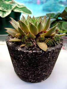 'Tufa Pot