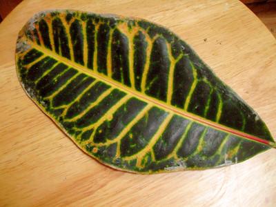 Cast Leaf #4