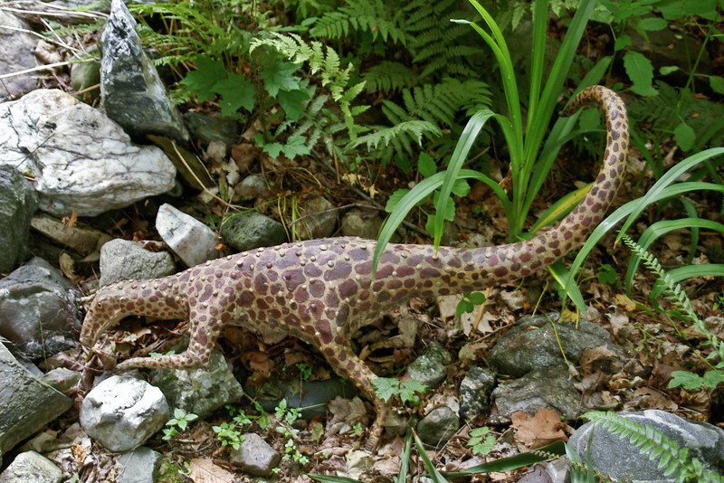 Spotted Raptor