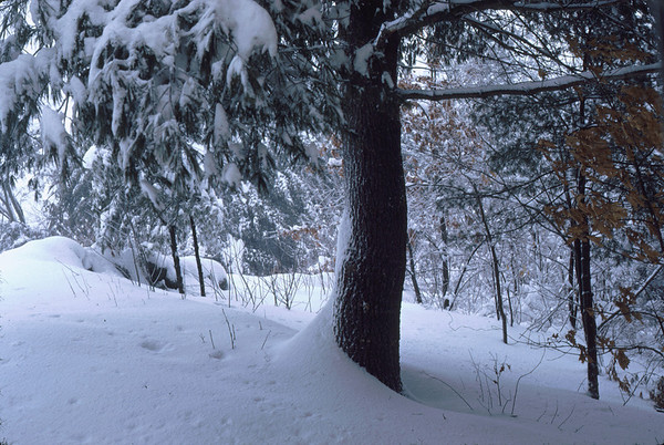 Winter at Home, Westford, Massachusetts