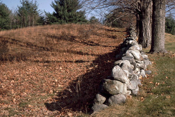 New England Stone Wall, Carlisle, Massachusetts