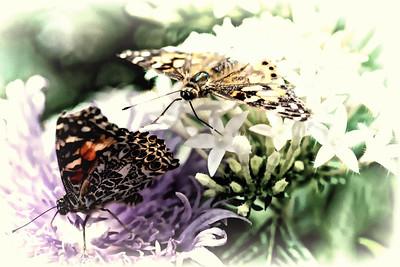 Butterflies - Lukas Nursery
