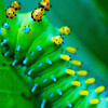 """16x12""""     Caterpillar   Canvas print   Available in other sizes"""