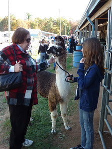 Barbara makes friends with a young llama. Luckily we have no room in the car for another passenger.