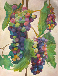 Watercolor on 300 pound Arches watercolor paper c. 2004 30 inches x 22 inches This is based off of a photo of grapes from Orfila vineyard.