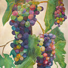 Watercolor on 300 pound Arches watercolor paper c. 2004<br /> 30 inches x 22 inches<br /> This is based off of a photo of grapes from Orfila vineyard.