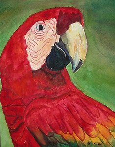 Parrot Watercolor on 300 pound Arches watercolor paper c. 2003 8 inches x 10 inches