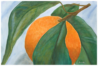 Orange Watercolor on 300 pound Arches watercolor paper c. 2003 22 inches x 30 inches. Third in a series of fruit and vegetable-themed paintings This was painted based on a photograph by/with permission from Photodude (photodude.com).