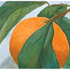 Orange<br /> Watercolor on 300 pound Arches watercolor paper c. 2003<br /> 22 inches x 30 inches.<br /> Third in a series of fruit and vegetable-themed paintings<br /> This was painted based on a photograph by/with permission from Photodude (photodude.com).