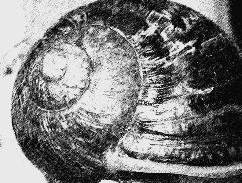 Snail inspiration