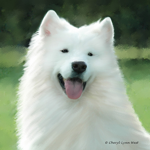 AKC, Int Ch. Omega /Wintwerway Showstopper, HT, PT,HCT, JHD, HIC, HTAD1s, HTAD2S, HIT(3)AHBA, BBBEIS(Int), CGC - Cork was loved by Louis & Frances Thompson, Omega Samoyeds
