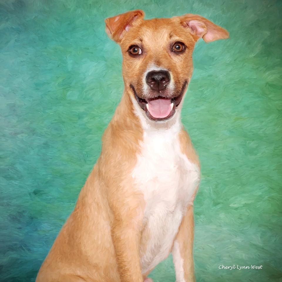 Tinley, a shelter dog