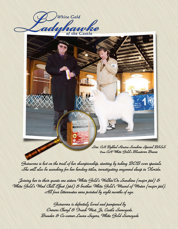 Guinevere - White Gold Ladyhawke of the Castle - ad for the SCA Bulletin - Spring issue 2010