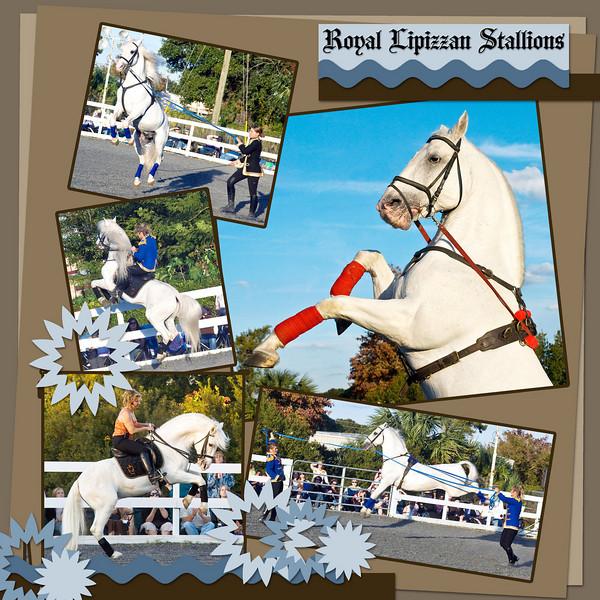 Royal Lipizzan Stallions, performing at Freedom Ride, Orlando, Florida