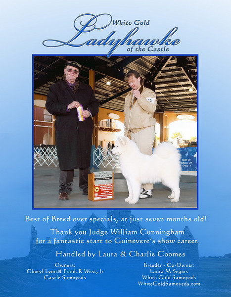 Guinevere - White Gold Ladyhawke of the Castle - ad for the Working Dog Digest