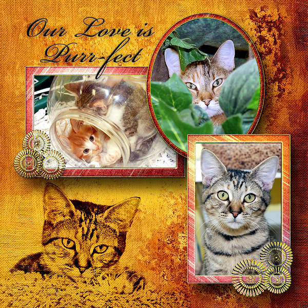 Cats and kittens from the Seminole County Animal Services