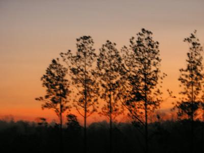 Sunrise hwy 16 12 207  (3)