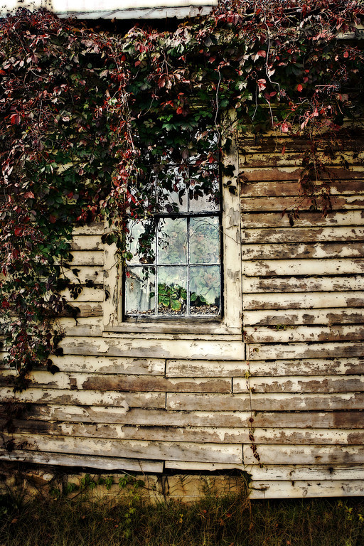 Abandoned house with vines growing inside - Warrenton, NC