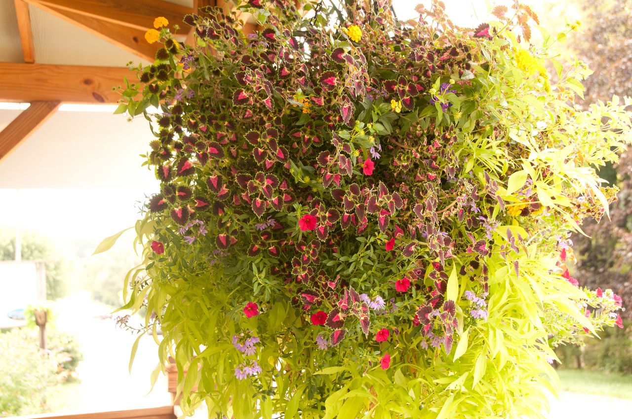Beautiful hanging basket at Crimson Laurel a gallery featuring amazing selection of pottery in Bakersville NC