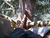 Beau's tree hugger feet!  Looks like a comfy spot...