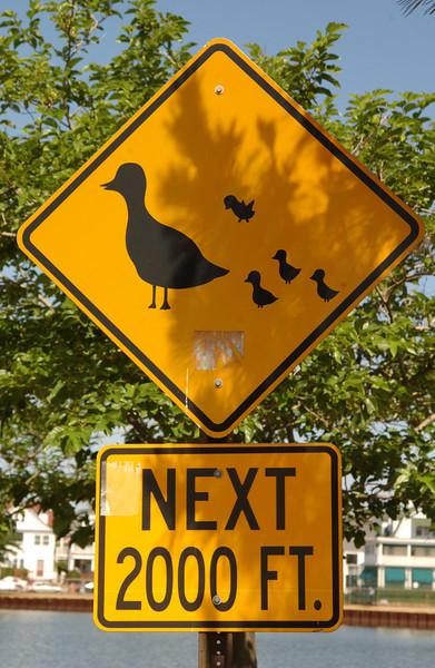 Duck crossing sign in Ocean Grove