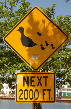 Duck crossing sign in Ocean Grove