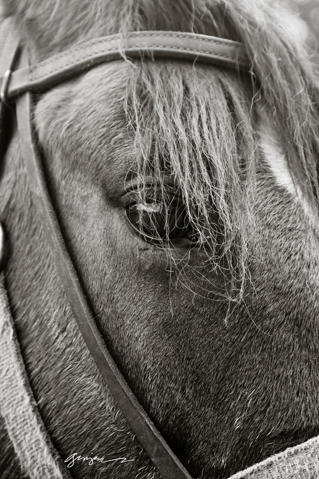 The beautiful old mare.   Can you see her wisdom?  Can you see her soul?