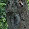Kyssetræ