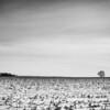 20130202-RuralLandscape-r-2862-3