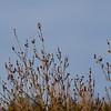 Flaggspett / Great Spotted Woodpecker <br /> Linnesstranda, Lier 24.4.2012<br /> Canon EOS 7D + EF 400 mm 5,6 L