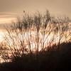 Skjære / Eurasian Magpie<br /> Linnesstranda, Lier 26.3.2017<br /> Canon 7D Mark II + Tamron 150 - 600 mm 5,0 - 6,3 G2 @ 500 mm