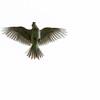 Sanglerke / Eurasian Skylark<br /> Linnesstranda, Lier 24.6.2012<br /> Canon EOS 7D + EF 100-400 mm 4,,5-5,6 L