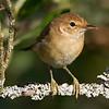 Rørsanger / Eurasian Reed-Warbler <br /> Linnesstranda, Lier 1.9.2013<br /> Canon EOS 7D + Tamron 150-600 mm 5,0 - 6,3 @ 450 mm
