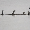 Gråhegre / Grey Heron<br /> Linnesstranda, Lier 22.10.2016<br /> Canon 7D Mark II + Tamron 150 - 600 mm 5,0 - 6,3 G2