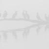 Storskarv / Great Cormorant<br /> Linnesstranda,  Lier  8.11.2015<br /> Canon 7D Mark II + Tamron 150-600 mm 5,0-6.3