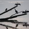 Storskarv / Great Cormorant <br /> Linnesstranda, Lier 5.11.2005 <br /> Canon EOS 20D + EF 200 mm 2,8 L + Extender 1.4 x
