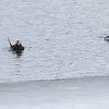 Havelle / Longtailed Duck<br /> Haukelifjell, Telemark 12.5.2013<br /> Canon EOS 7D + EF 100-400 mm 4,5-5,6