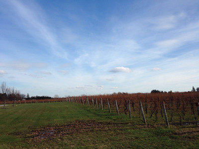 Creekside Winery Vineyard