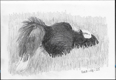 Skunk in the Grass (3)