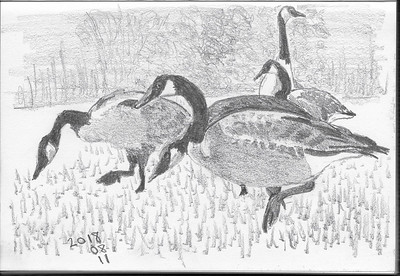 Geese On Parade