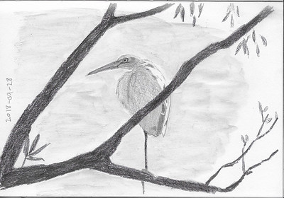Egret in a Tree