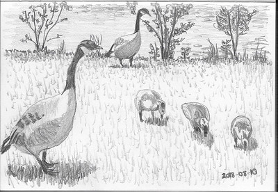Grazing Goose Family