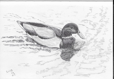 Paddling Duck