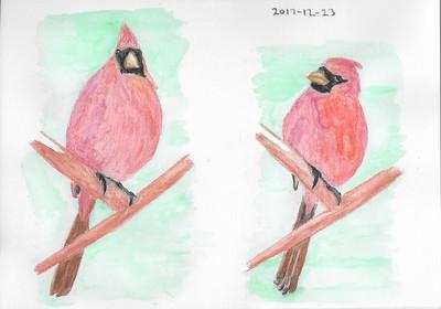 Watercolour Pencil Cardinal Studies