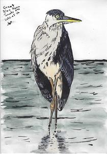 Great Blue Heron Strikes a Sassy Pose