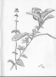 Herb Garden Study