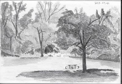 Misty Park Scene