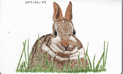 A Young Rabbit In The Grass
