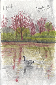 Goose In the River